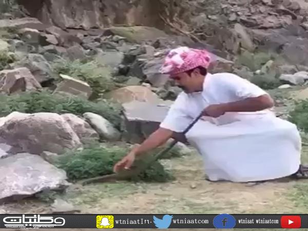 """بالفيديو- شاب يُعرض نفسه للخطر اثناء اصطيادة """"كوبرا""""سامة في جنوب المملكة"""