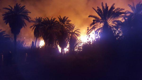 تبوك :حريق اشجار ونخيل بوادي قراقر يستنفر فرق الدفاع المدني
