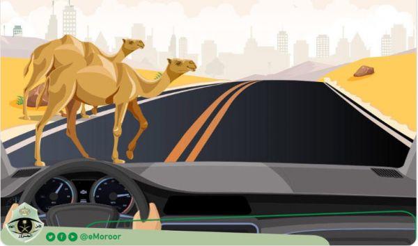 المرور يُحذر من تساهل ترك الحيوانات تعبر الطريق فهل مرور #بارق سيتفاعل