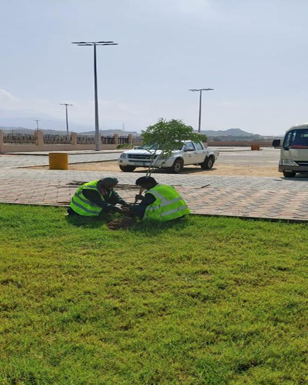 بلدية بارق تُزين حدائق ثلوث المنظر بأكثر من 50 شتلة متنوعة