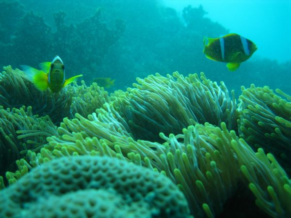 محطة توليد جنوب جدة تفوز بجائزة مكة للتميز نظير مبادرة استزراع الشعب المرجانية