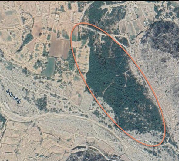 غابة (مورك) شمال ثلوث المنظر مأوى لمُخالفي الإقامة ومُطالبات بجعلها منتزه عام
