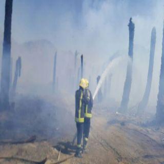 مدني #بيشة يُسيطر على حريق جذوع نخل بإحدى مزارع مركز سحام