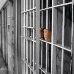 منع دخول القطط إلى السجون تحسباً لتهريب المخدرات للسجناء