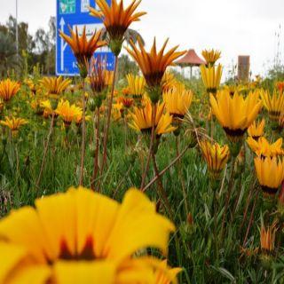 #أمانة_الحدود_الشمالية تستقبل الصيف بزراعة 75 الف ورده صيفية