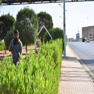 #بلدية_طريف تواصل جهودها لإظهار جمال المحافظة بزرعه الجزر الوسطية للشوارع  .