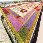 """""""ينبع"""" 15 مليون وردة تزين أكبرحديقة ورد في السعودية"""