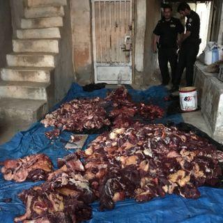 بلاغ مواطن يوقع بعمالة آسيوية تقوم بالذبح داخل مقر سكنهم في #محايل