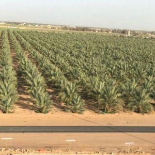 فوز أربعة مزارع من البكيرية بجائزة الأمير د.فيصل بن مشعل للمزرعة النموذجية
