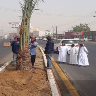 بلدية #بارق تبدأ زراعة 200 نخلة وسط الشارع العام