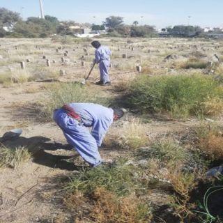 عسير :بلدية مدينة سلطان تعالج مظاهر التشوه البصري