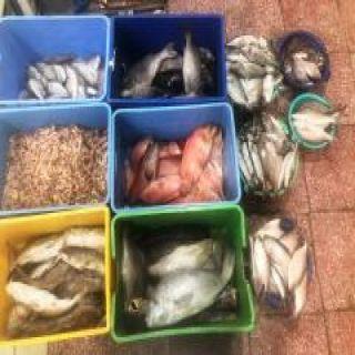 #أمانة_عسير تضبط أكثر من 150 كيلو جراما من الأسماك الفاسدة