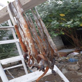 """بلدية #محايل تكشف حقيقة فيديو """"الثعابين"""" المتداول"""