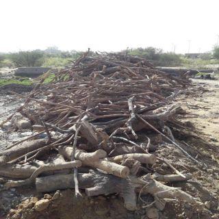 مكتب بيئة #محايل يُصادر كميات من الحطب كانت مُعدة للبيع