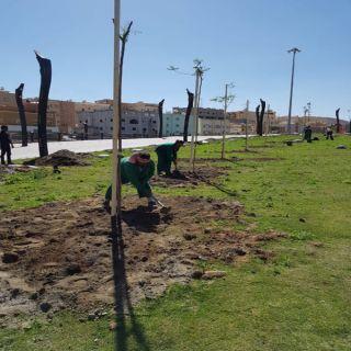 #أمانة_عسير توزع 5800 شجرة على طرقات و احياء أبها