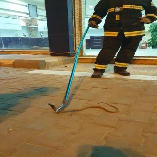 مدني #المجاردة يسيطر على ثعبان داخل أحد المحال التجارية