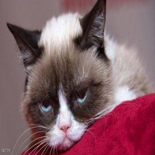 القط الغاضب رحل وترك 1.5 مُتابع على تويتر و2.4 على إنستغرام