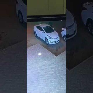 فيديو - لص يسرق مركبة بعد دهس مالكها