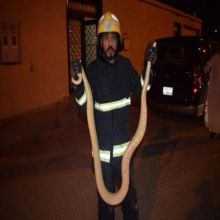 ثعبان حي الضاحي في بريدة يستنفر فرق الدفاع المدني