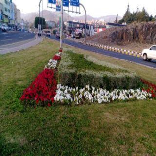 #أمانة_عسير تعزز الغطاء النباتي بزراعة الاف الورود في مدينة أبها