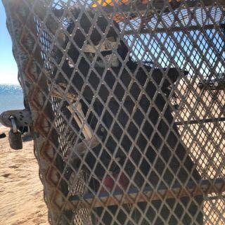 حقيقة العثور على جثة داخل قفص في بحر قيال بمنطقة #تبوك