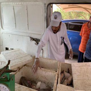 ضبط ومُصادرة 60 كجم أسماك فاسدة بمركبة بائع متجول في #بارق
