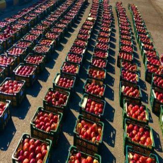 #أمانة_الشرقية تضبط طنين من فاكهة التفاح في سوق الخضار ظهرت عليها علامات التلف قبل توزيعها