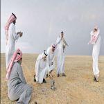صحراء الحمّاد.. ملتقى الصقور النادرة ومرتفعة الثمن